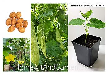 Chinese Karela Seeds - Bitter Gourd